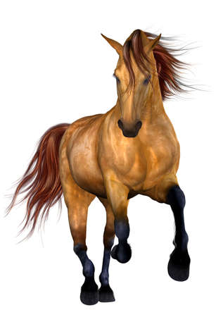 Beautiful Horse Stock Photo