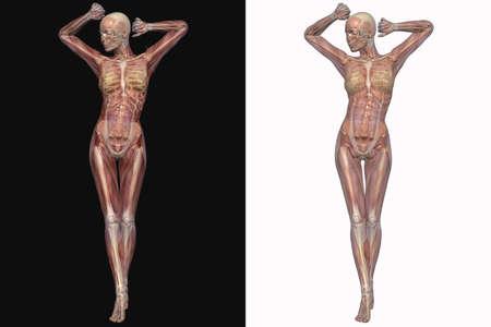 투명 근육을 가진 여성 해골 스톡 콘텐츠