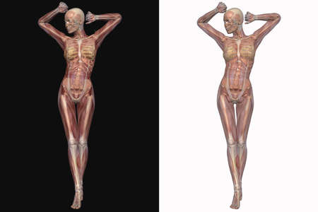 Female Skeleton With Transparent Muscles Banque d'images