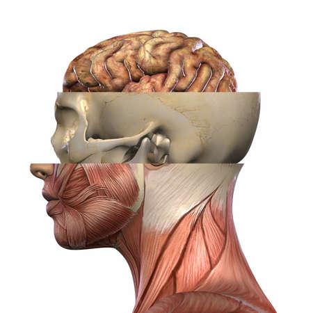 medic: Female Anatomy Body