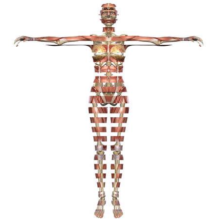 Female Anatomy Body Stock Photo - 4954348