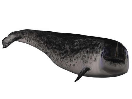 Narwhal photo