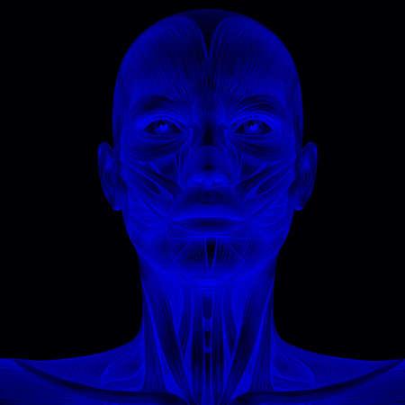 Human Anatomy Stock Photo - 5127120