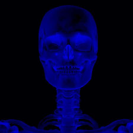 musculature: Human Anatomy