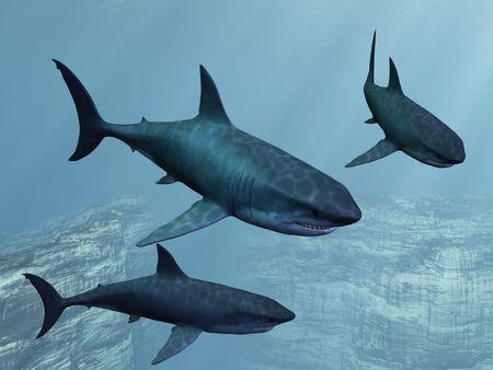 Great White Shark Stock Photo - 6614017