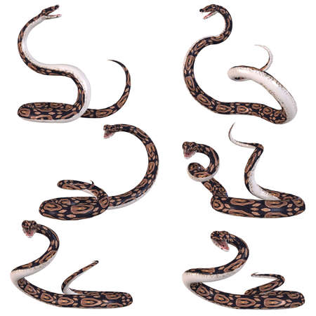 Snake-Ball Python Banque d'images