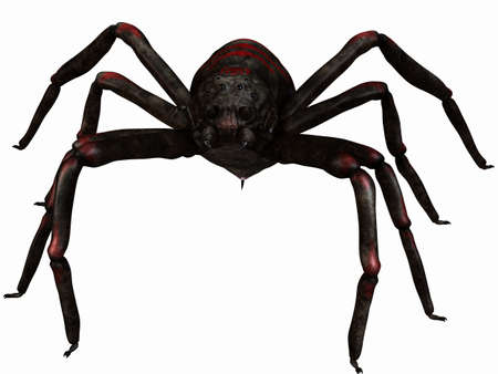 tarantula: Fantasy Spider