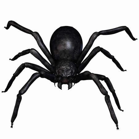 Fantasy Spider