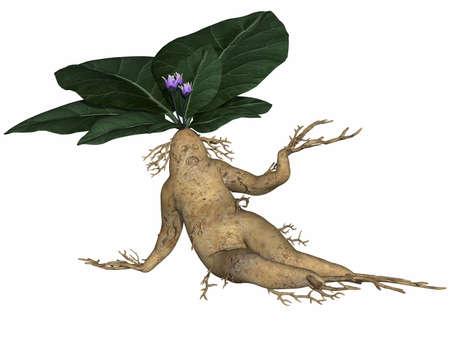 tuber: Toon root tuber