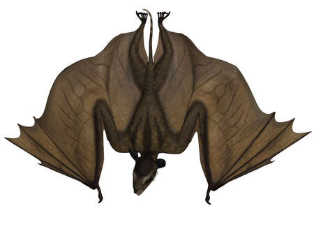 caudal: Icaronycteris - 3d Dinosaur
