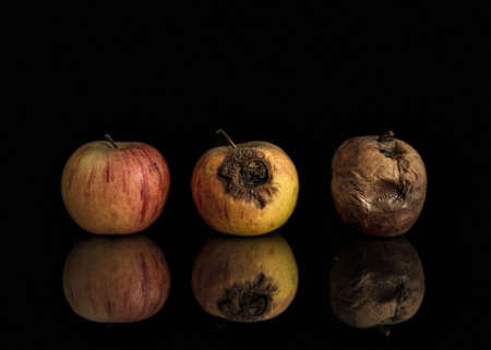 good and bad: Line of three apples including good, bad and completely rotten. Set on black background with reflection. Illustrates progression from health to decay, also can be metaphoircal for change from good to evil.