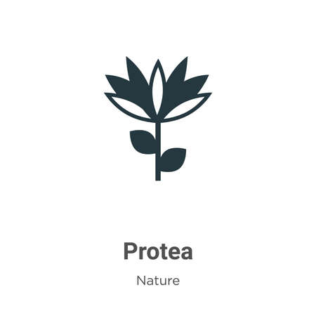 Protea vector icon on white background. Flat vector protea icon symbol sign from modern nature collection for mobile concept and web apps design.