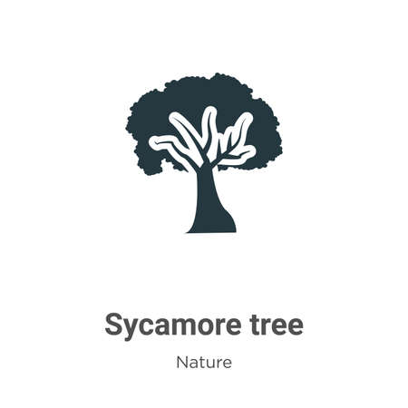 Sycamore tree vector icon on white background. Flat vector sycamore tree icon symbol sign from modern nature collection for mobile concept and web apps design.