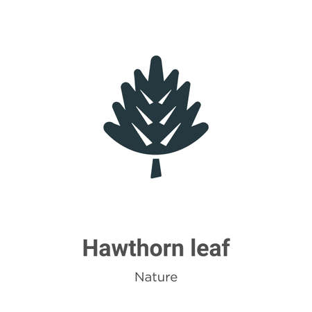 Hawthorn leaf vector icon on white background. Flat vector hawthorn leaf icon symbol sign from modern nature collection for mobile concept and web apps design.
