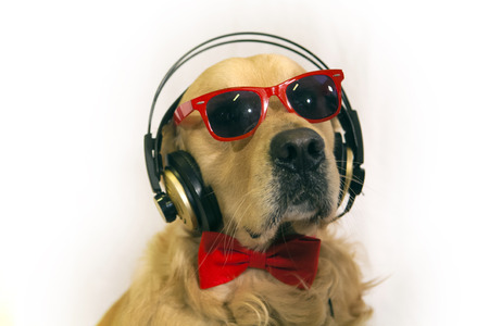 retreiver: golden retreiver with red sunglasses,headphones and papillon Stock Photo