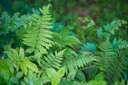 micro climate: Ferns at rainforest  Stock Photo
