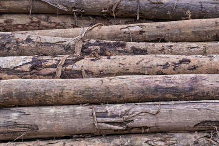 workable: Pile of Timber Logs in rainforest