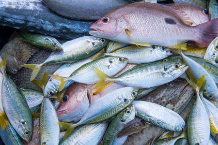 Fresh raw red snapper,gruper and mackerel fish in market photo