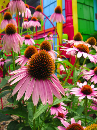 Close-up of a purple coneflower blossom in the midst of a colorful fantasy-like garden of flowers in front of a brightly painted structure in the background.