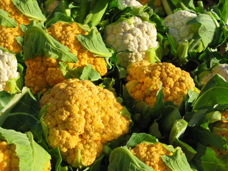 Beautiful heads of white and orange cauliflower on a farmer