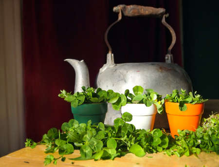 Green shamrocks displayed in a trio of flower pots in the colors of the Irish flag with an antique tea kettle