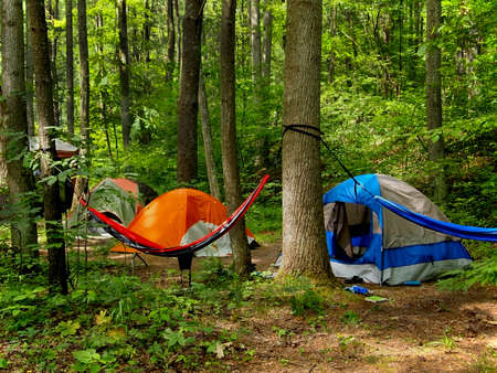 A small grouping of tents and a hammock slung between two trees out in the wilderness
