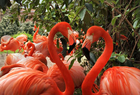 plummage: A pair of flamingos make a heart shape with their heads facing each other