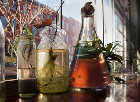 Cuttings from common indoor house plants growing roots in water in assorted glass bottles and jars.