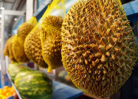 Whole durian fruits for sale hang in plastic mesh bags for sale in a stall at an outdoor market  Stock Photo