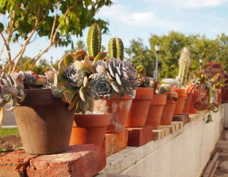 A line of terra cotta clay pots with a collection of different succulent and cactus species sits along a white concrete wall surrounding a patio.