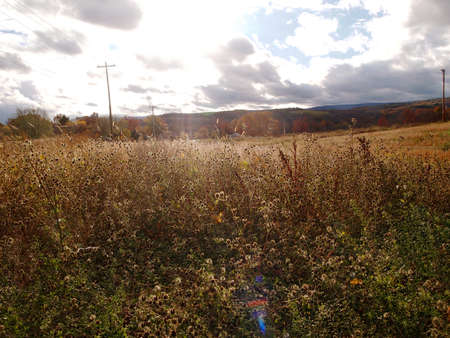 An autumn landscape in the late afternoon featuring a colorful lens flare in a meadow of dried summer wildflowers with power lines and changing mountain foliage in the background.