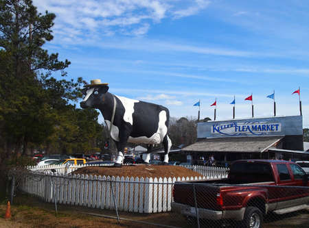 SAVANNAH, GEORGIA - FEBRUARY 20, 2016: A giant fiberglass cow sculpture, formerly belonging to a Savannah area dairy, decades ago, now stands in front of Kellers Flea Market, on the outskirts of Savannah, GA.