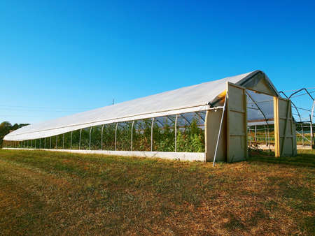 A long hothouse with open barn style doors and rolled up sides with plants seen growing inside.