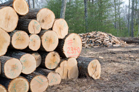 lumber mill: Pile of Timber marked and ready for the Mill, with a pile of Split Firewood in the background.