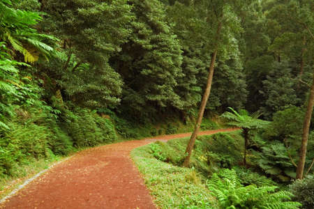 luxuriance:  A red curving dirt road leading into the forest, San Miguel island, Azores, Portugal