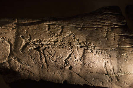 Prehistoric rock art of a horse or antelope under museum like tangent light. Vila Velha de Rodao, Portugal. Editorial