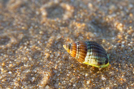 Small and colourful sea snail shell over the sand at sunset light  Stock Photo