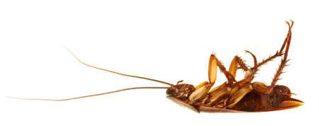 reflexive: Dead cockroach profile on its back over reflexive surface and a gradient background. Blatta americana aka Periplaneta americana.