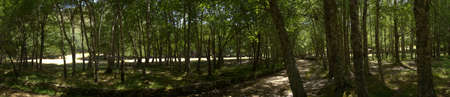 Panorama of trees, tree trunks, shadow and some clearings at Covao dAmetade  At the center the almost dry river Zezere bed. Estrela mountain range (Serra da Estrela). Portugal.