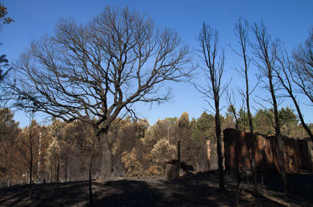 Cork tree, pine trees and an old shed burnt to the ground in a massive forest fire against a blue sky. Lameira Cimeira, Pedrogao Grande, Portugal. Stock Photo