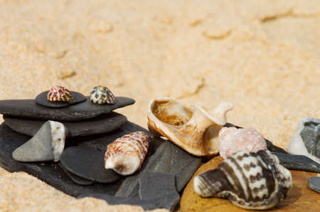 Composition of stones and assorted seashells laied out over the fine beach sand. Copy space over the out of focus sand.