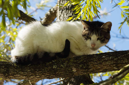 Stray white and grey cat ran up a tree and waits on a branch for the threat to go away. Looking suspicious. Stock Photo