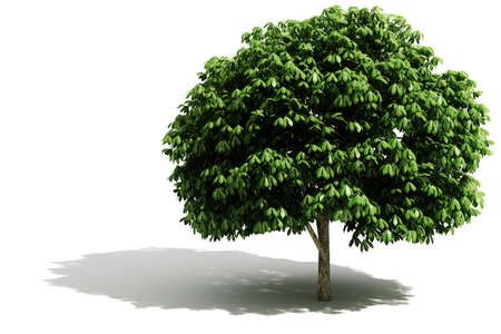 huge tree: 3d tree render on white background Stock Photo