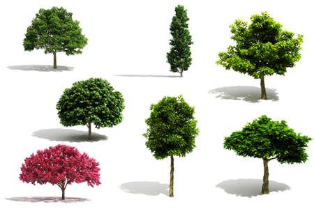 solitary tree: 3d tree pack - render on white background