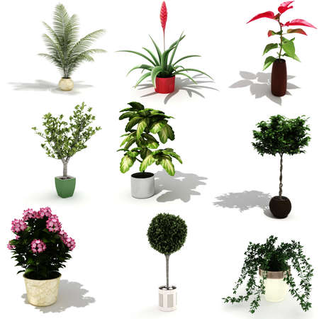 3d pack of beautiful home plants photo