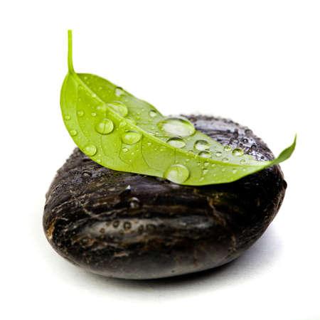 piedras zen: piedras zen y freshplant con gotas de agua
