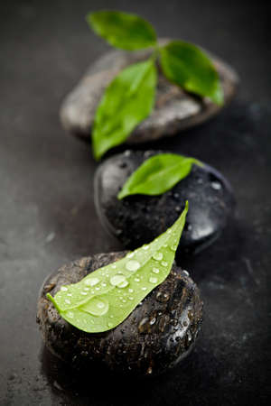 zen stones and freshplant  with water drops photo