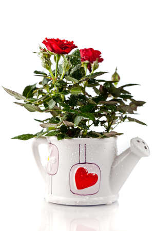 bouquet of red roses photo