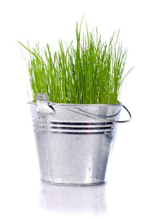 emmer water: vers groen gras in een kleine metalen emmer