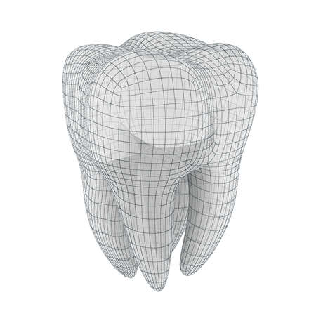 tooth root: 3d tooth on white background